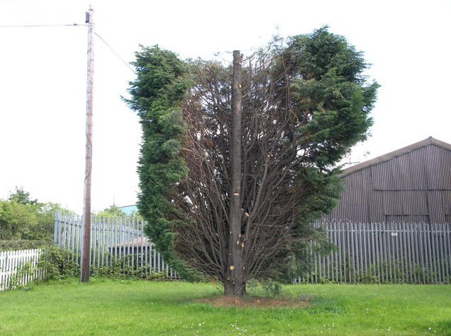 bad pruning of a tree Daventry