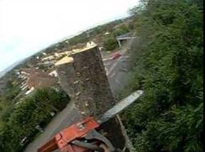 tree dismantling Daventry