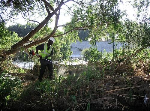 Daventry tree removal