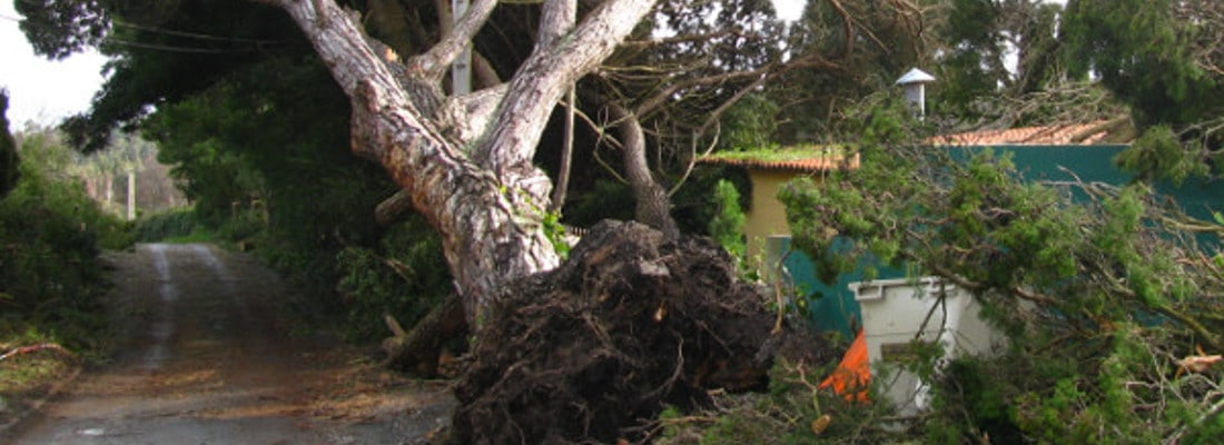 emergency tree removal Hulcote tree uprooted after storm banner