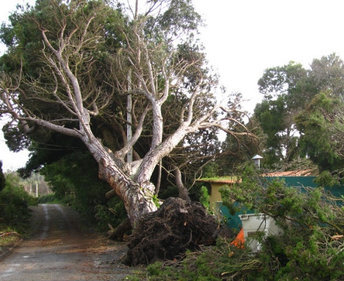 emergency tree removal Dallington tree uprooted after storm